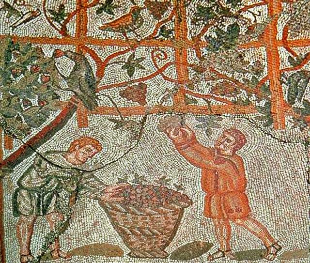 Mosaico romano della vendemmia